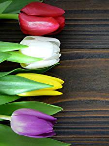 Fotos Tulpen Hautnah Bretter Mehrfarbige Blumen