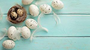Hintergrundbilder Federn Bretter Ei Nest