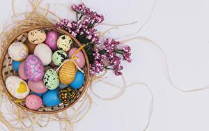 Hintergrundbilder Feiertage Ostern Farbigen hintergrund Ei Design Ast