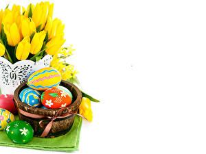 Bilder Feiertage Ostern Tulpen Weißer hintergrund Ei Blumen