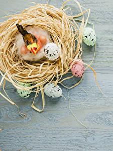 Bilder Feiertage Ostern Vögel Bretter Nest Ei
