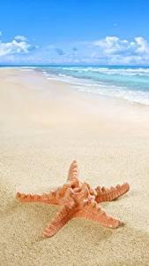 Hintergrundbilder Meer Küste Seesterne Strand