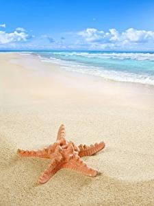 Hintergrundbilder Meer Küste Seesterne Strand Natur