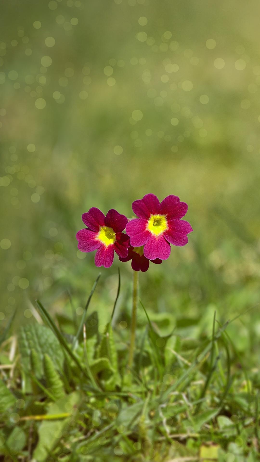 Обои размытый фон, цветок. Цветы foto 19