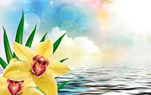 Fotos Orchideen Wasser Großansicht Gelb Blumen