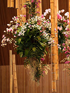 Fotos Orchideen Bambusgewächse Design Blumen