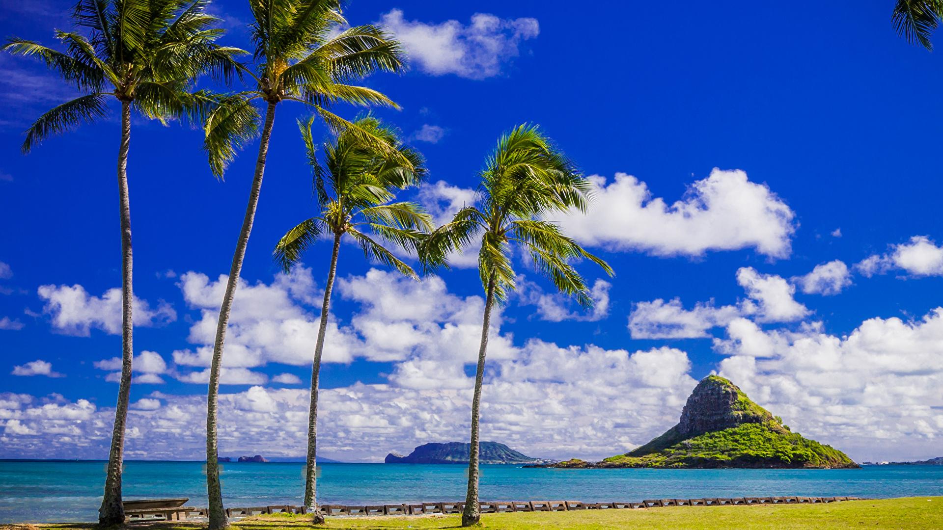 壁紙 19x1080 熱帯 海岸 空 アメリカ合衆国 ハワイ州 ヤシ 雲 自然 ダウンロード 写真