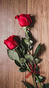 Hintergrundbilder Rosen Bretter Rot Zwei Blumen