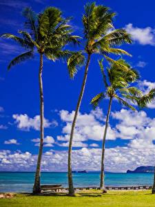 Bilder Tropen Küste Himmel Vereinigte Staaten Hawaii Palmengewächse Wolke Natur