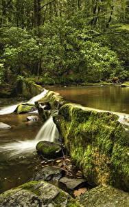 Fotos Vereinigte Staaten Park Steine Bäche Laubmoose Great Smoky Mountains National Park Natur