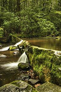 Fotos Vereinigte Staaten Park Steine Bach Laubmoose Great Smoky Mountains National Park Natur