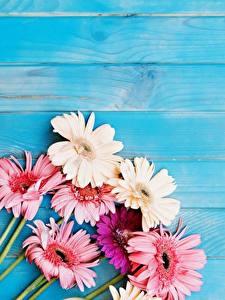 Fotos Gerbera Bretter Vorlage Grußkarte Blumen
