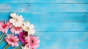 Fotos Gerbera Bretter Vorlage Grußkarte Blüte