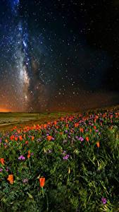 Bilder Mohnblumen Himmel Stern Felder Nacht Natur