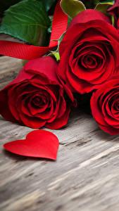 Bilder Rosen Bretter Rot Herz Blumen