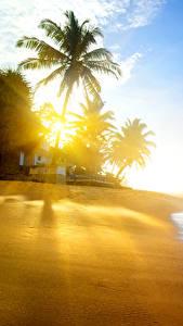 Bilder Tropen Küste Wasserwelle Palmengewächse Lichtstrahl Strände