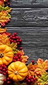 Fotos Kürbisse Herbst Blatt Ahorne Bretter