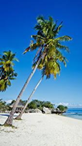 Bilder Philippinen Tropen Küste Palmengewächse Sand Strand