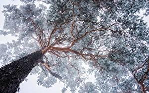 Hintergrundbilder Bäume Baumstamm Untersicht Ansicht von unten Ast Natur