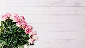 Bilder Blumensträuße Rosen Rosa Farbe Vorlage Grußkarte Blüte
