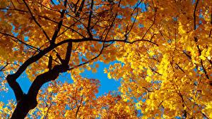 Bilder Herbst Ast Blattwerk Natur