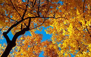 Bilder Herbst Ast Blattwerk