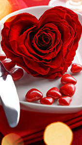 Fotos Valentinstag Rosen Großansicht Rot Herz Teller Blumen