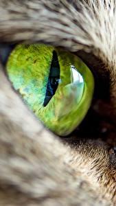 Bilder Katze Makro Augen Großansicht ein Tier