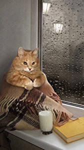 Bilder Kreativ Katze Milch Trinkglas Buch Fenster Tropfen Lustige Tiere