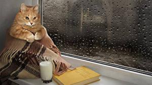 Bilder Originelle Katze Milch Trinkglas Bücher Fenster Tropfen Lustige Tiere