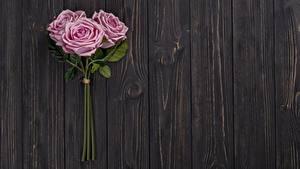 Hintergrundbilder Rosen Rosa Farbe Drei 3 Bretter Blumen