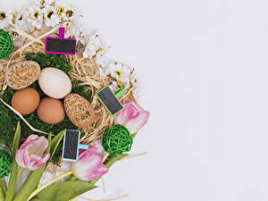 Hintergrundbilder Feiertage Ostern Tulpen Grauer Hintergrund Ei