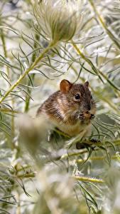 Fotos Mäuse Ast ein Tier