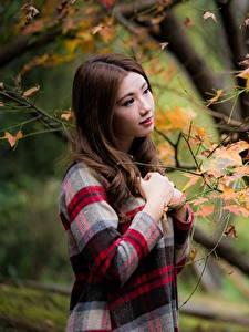 Fotos Herbst Asiatische Ast Braune Haare junge Frauen