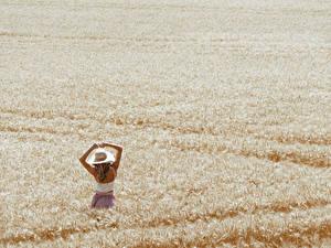 Desktop hintergrundbilder Acker Weizen Natur Mädchens