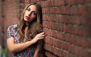 Picture Pose Wall Made of bricks Hands Hair Staring Blurred background Brown haired Nicole young woman