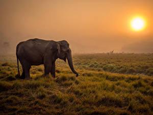 Bilder Elefanten Sonne Gras Nebel Savanna Tiere