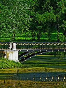 Bilder Sankt Petersburg Russland Park Brücken Teich Pushkino