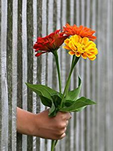 Wallpaper Bouquets Calendula Fence Hands Flowers
