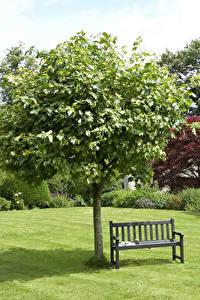 Bilder Park Bäume Rasen Bank (Möbel) Fichten