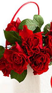 Fotos Rosen Hautnah Rot Blumen
