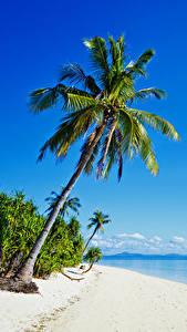 Hintergrundbilder Philippinen Tropen Küste Meer Palmengewächse Strände