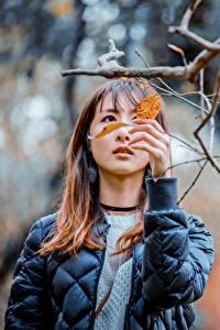 Hintergrundbilder Asiatisches Bokeh Ast Blatt Jacke Hand Braune Haare Mädchens