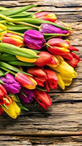 Bilder Tulpen Viel Bretter Bunte Blumen