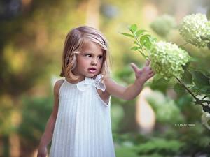 Bilder Hortensien Kleine Mädchen Dunkelbraun Julia Altork kind
