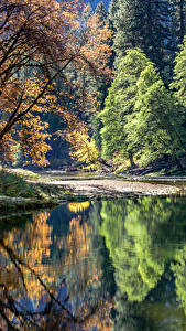 Hintergrundbilder USA Park See Yosemite Bäume Reflexion Natur