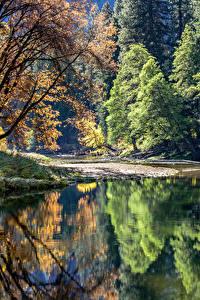 Hintergrundbilder USA Park See Yosemite Bäume Spiegelung Spiegelbild Natur