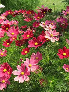 Fotos Schmuckkörbchen Viel Dunkelrote Blüte