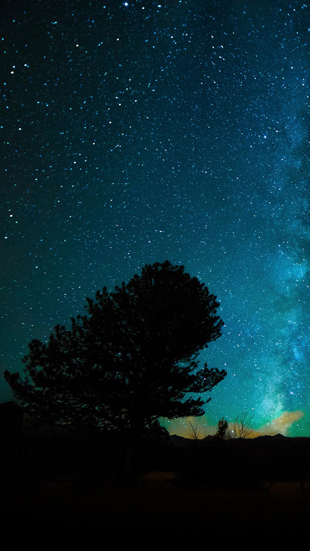 壁紙 1080x19 空 恒星 夜 木 自然 ダウンロード 写真