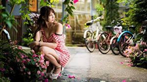Fotos Asiatisches Pose Kleid Unscharfer Hintergrund Braune Haare Sitzend junge Frauen